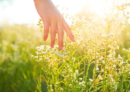 Mano de la mujer que atraviesa el campo pradera con flores wilde
