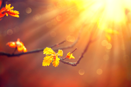 Autumn background with colorful leaves and sun flares Stock Photo