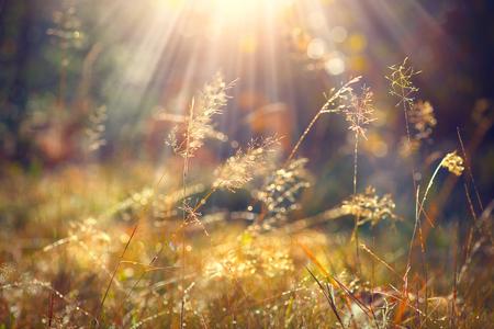 Prachtige natuur achtergrond. Herfst gras met ochtenddauw in zonlicht close-up