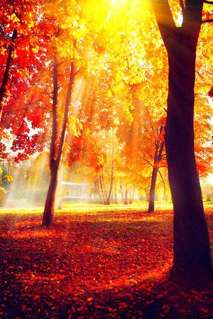 nature scenery: Autumn. Fall nature scene. Beautiful autumnal park Stock Photo
