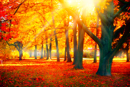 Autumn. Fall nature scene. Beautiful autumnal park Stok Fotoğraf