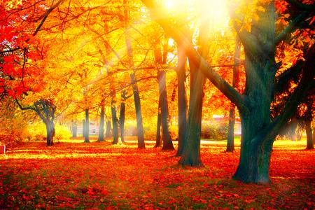 Autumn. Fall nature scene. Beautiful autumnal park Archivio Fotografico