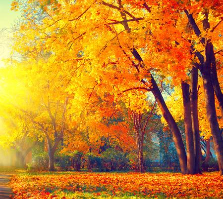 Herfst. Fall natuur scène. Mooie herfst park Stockfoto - 63175203