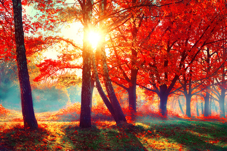 Autumn. Fall nature scene. Beautiful autumnal park 스톡 콘텐츠
