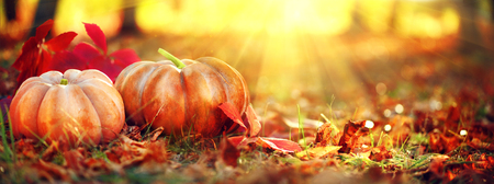 Autumn Halloween pumpkins. Orange pumpkins over bright autumnal nature background Stock Photo