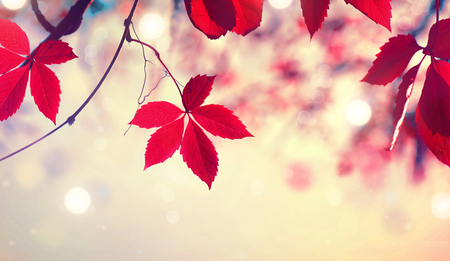 Colorful autumn leaves over blurred nature background. Fall Stock Photo