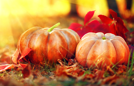 Orange pumpkins over bright autumnal nature background. Harvest concept