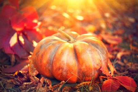 Autumn Halloween pumpkin. Orange pumpkin over bright autumnal nature background