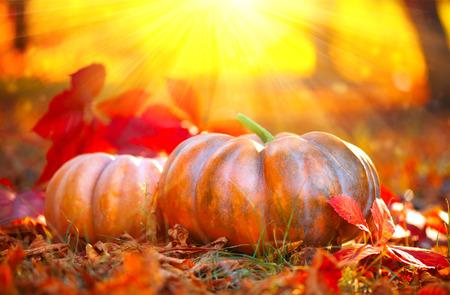 Autumn Halloween pumpkins. Orange pumpkins over bright autumnal nature background Stock Photo