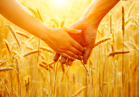 cereals holding hands: Couple holding hands and walking on golden wheat field over sunset