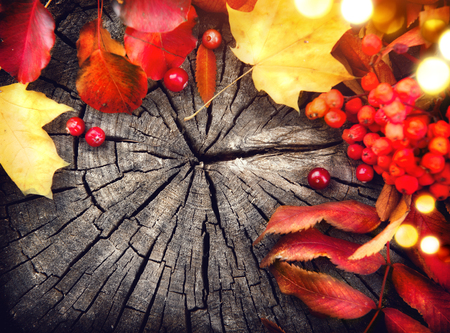 Autumn leaves and cranberries over cracked wooden background Stock Photo