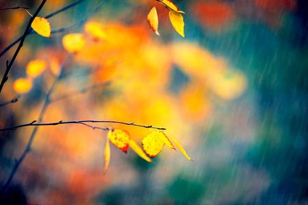Autumn background. Beauty nature scene
