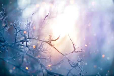 Winter nature. Christmas holiday background. Frozen tree branch closeup