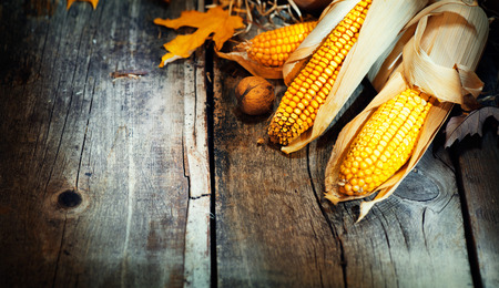 Thanksgiving Day. Wooden table decorated with corncobs and leaves background Stock Photo