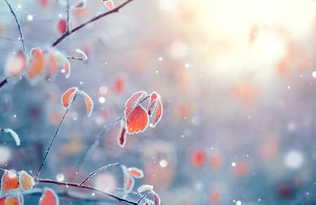 Hiver nature background. branche surgelés avec des feuilles gros plan