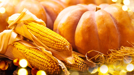 traditional: Thanksgiving Day background. Autumn pumpkins and corn. Harvest