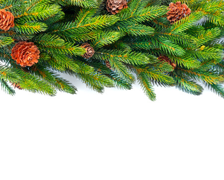 xmass: Christmas tree with cones border background isolated on white