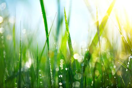 Herbe. Frais, vert, herbe de printemps avec des gouttes de rosée closeup Banque d'images - 66776007