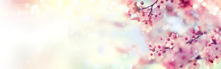 fruit: Spring border or background art with pink blossom. Beautiful nature scene with blooming tree and sun flare Stock Photo