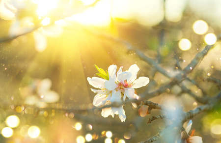 Spring Easter border or background art with blossom. Beautiful nature scene with blooming tree and sun flare Stock Photo