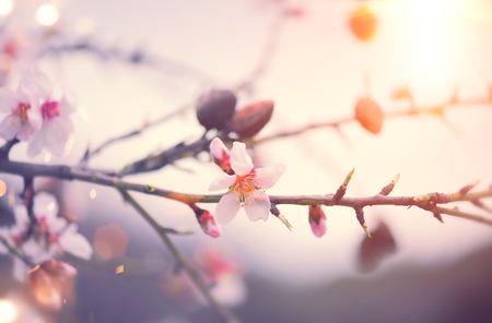 arbol de pascua: Primavera de fondo de la naturaleza con el almendro en flor. Escena de Pascua con flores de color rosa en un jardín Foto de archivo