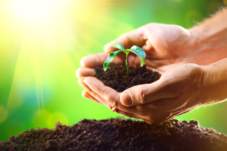 Mans hands planting the seedlings into the soil over nature green sunny background Imagens