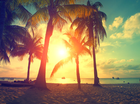 Sunset beach with palm trees and beautiful sky. Paradise scene of Caribbean Island Stok Fotoğraf
