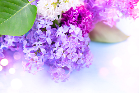 Lilac flowers bunch over blurred background 写真素材