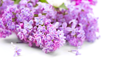 Lilac flowers bunch over blurred background Stock Photo