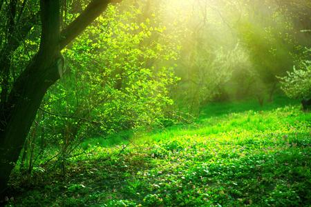 Lente park met groen gras en bomen. Prachtig natuurlandschap