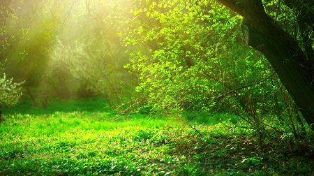 green park: Spring park with green grass and trees. Beautiful nature landscape Stock Photo