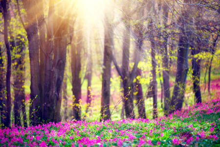 beautiful flowers: Spring park with green grass, blooming wild flowers and trees. Beautiful nature landscape