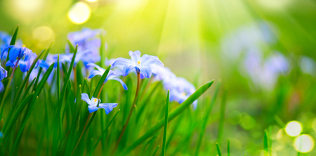 Snowdrop spring flowers. Beautiful blue spring easter holiday background Stock Photo
