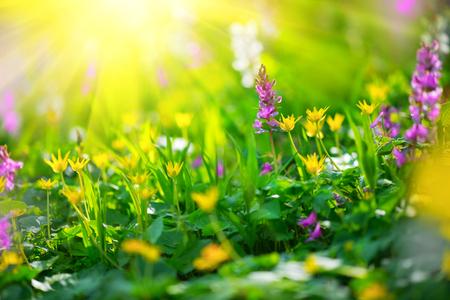 春の野の花。野生の花と自然草原フィールド