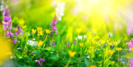 Spring wildflowers. Nature meadow field with wild flowers Stock Photo
