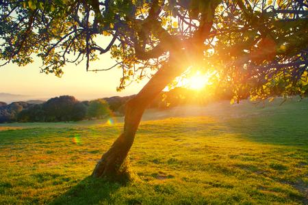 Mooi berg natuur landschap. Alpenweide met een boom boven zonsondergang