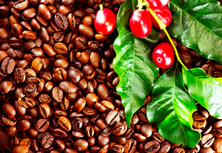 Café. Planta de café real sobre fondo de café tostado. Diseño de arte fronterizo Foto de archivo - 77374845