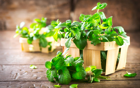 ミント。木製のテーブルのクローズ アップに新鮮な緑色有機ミントの葉の束