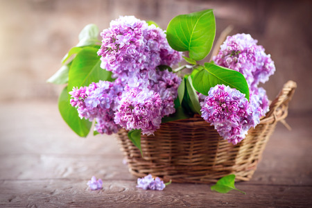 Lilac flowers bunch in a basket over blurred wood background Stock Photo