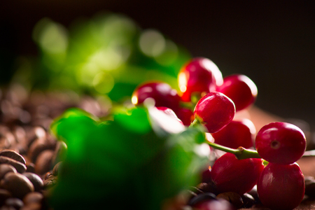 fruit: Coffee. Real coffee plant with red beans on roasted coffee beans background
