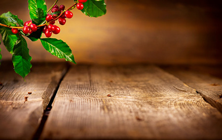 Coffee background. Real coffee plant on wooden table