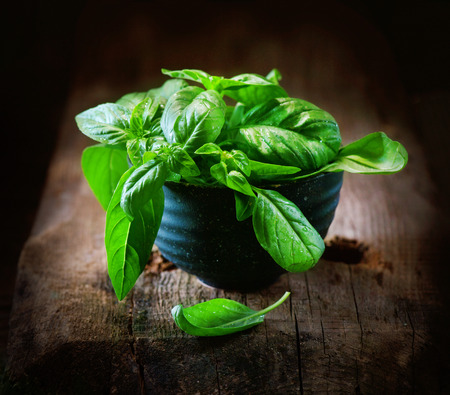 Basil. Closeup of fresh basil leaves in a bowl on dark rustic wooden table