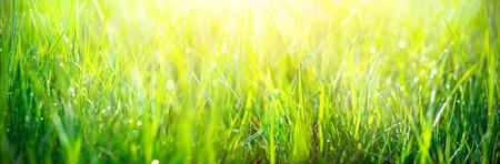 Groene gras achtergrond. Verse groene lente gras met dauw druppels close-up Stockfoto