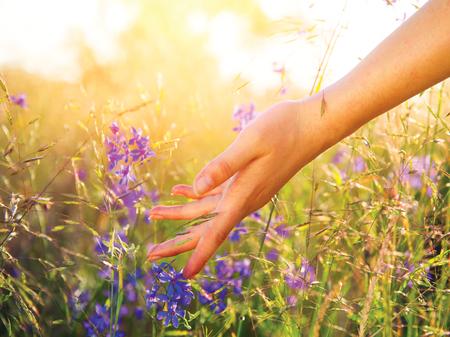 野生の花のクローズ アップに触れる女性の手。ヘルスケアの概念