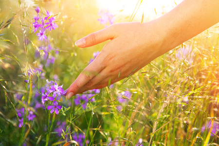 Woman hand touching wild flowers closeup. Healthcare concept. Alternative medicine