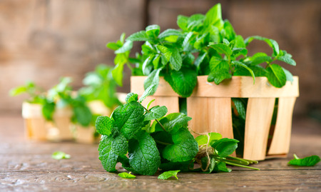 Mint. Bunch of fresh green organic mint leaf on wooden table closeup