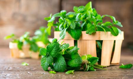 민트. 나무 테이블 근접 촬영에 신선한 녹색 유기 민트 잎의 무리