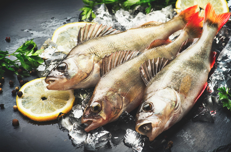cold: Fresh fish on ice with aromatic herbs, spices, salt. Raw perches on dark slate tray Stock Photo