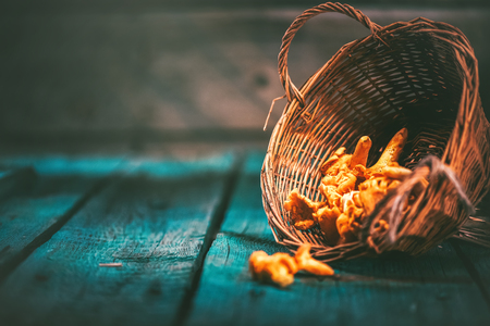 yellow: Raw wild chanterelles mushrooms in a basket over old rustic background
