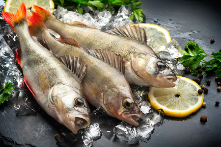 Fresh fish on ice with aromatic herbs, spices, salt. Raw perches on dark slate tray Standard-Bild
